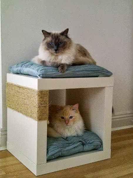 Cucce Per Gatti Fai Da Te Pagina 10 Di 10 Riciclofacileit