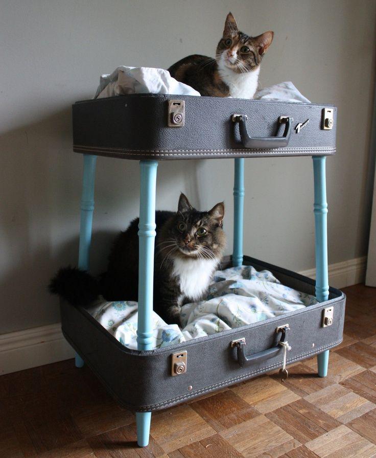 Cucce per gatti fai da te
